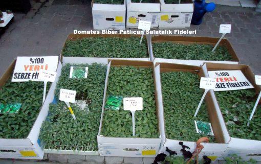 Karsiyaka Tarim Cim Cicek Sebze Fideleri Tohumlari Gubre